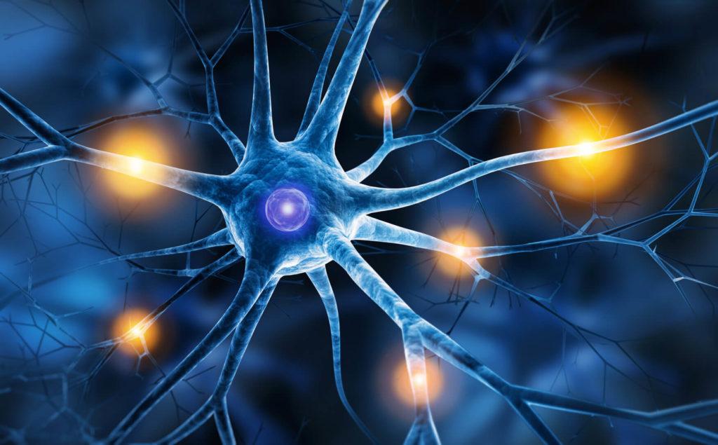 From: https://cdn.lelynx.fr/wp-content/uploads/2016/09/neurones-cerveau-1024x635.jpg